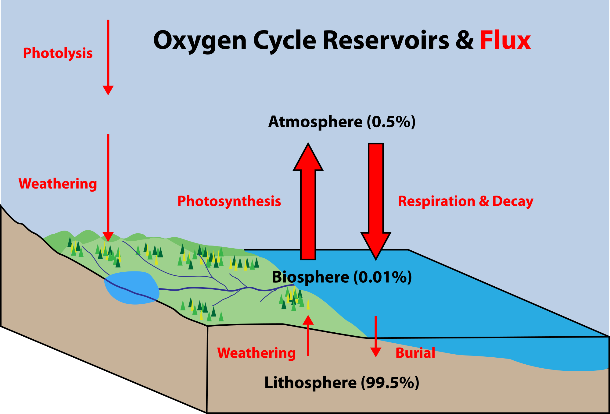 Nutrient cycles biospheres to ecosystems siyavula figure 822 oxygen cycle ccuart Image collections