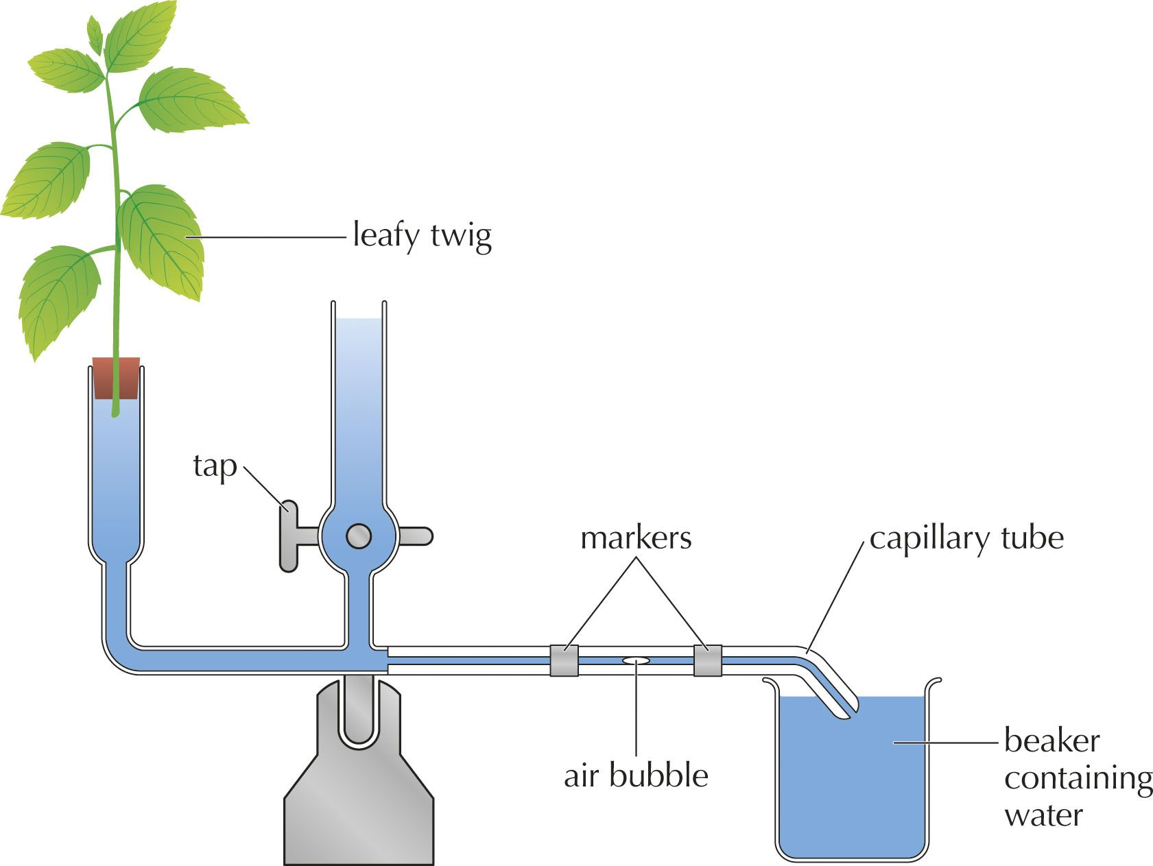 Transpiration | Support And Transport Systems In Plants