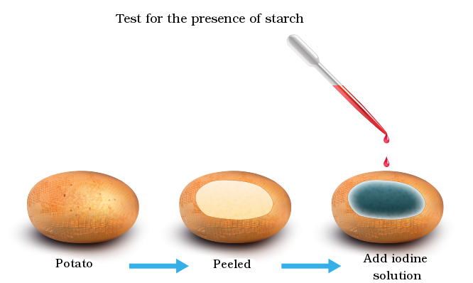 iodine test for starch results