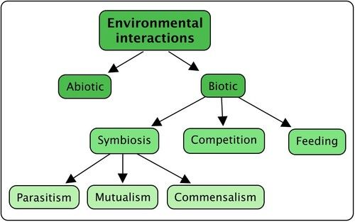 What Is Ecology? | Interactions And Interdependence Within ...